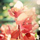 Coral Glow Bokeh Bougainvillea Botanical Photograph by joyfulroots