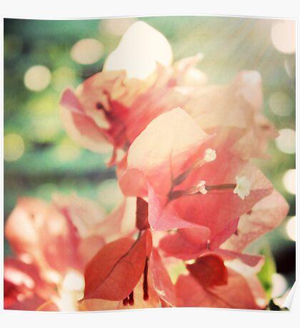 Coral Glow Bokeh Bougainvillea Botanical Photograph Poster
