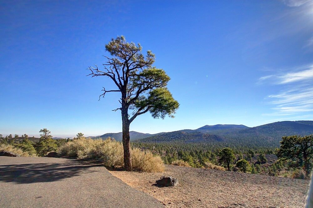 Standing Alone - Sunset Crater National Monument, AZ, USA by Edith Reynolds