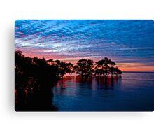 Mangroves at Nudgee Beach Canvas Print