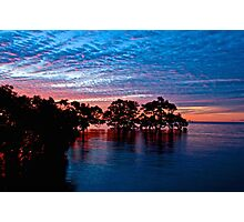 Mangroves at Nudgee Beach Photographic Print