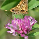 Skipper flower by William Brennan