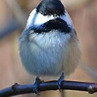 Charming Chickadees Part 2 by William Brennan