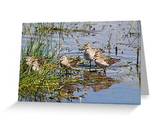 Sandpiper Congregation Greeting Card