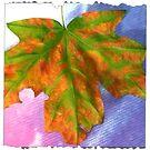 a leaf by Hotlilmamax6
