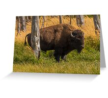 Bison In Yellowstone National Park USA,Sept 2012 Greeting Card