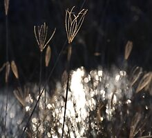 Grass by Woodgate