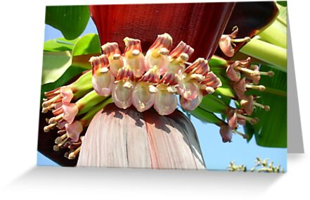 Flower Of The Banana Plant by taiche