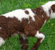Cute Brown and White Lamb with Ewe Sticker