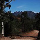 Twin Tree Lookout by rflower