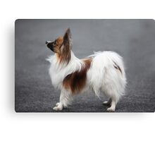 a small fluffy dog the side Canvas Print