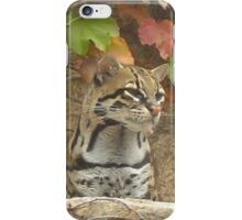 Ocelot on the Prowl iPhone Case/Skin
