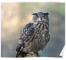oehoe - eagle-owl Poster