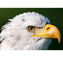 fish eagle Photographic Print