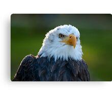 mister eagle Canvas Print