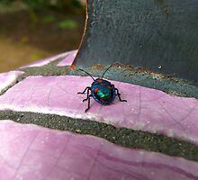 The Metallic Majesty of MarbleBug: Maleny, Queensland, Australia by linfranca