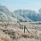 winters grip by Steve Shand