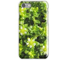 Small flowers in the forest iPhone Case/Skin