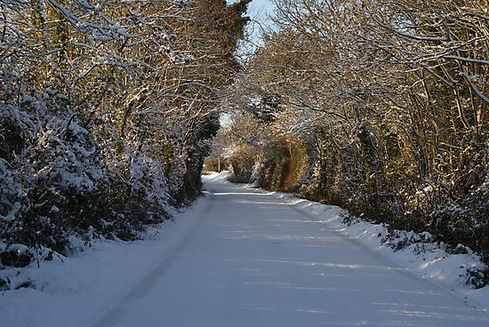 Snowy lane by DES PALMER