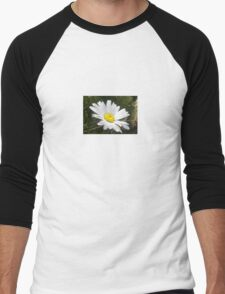 Close Up of a Margarite Daisy Flower Men's Baseball ¾ T-Shirt