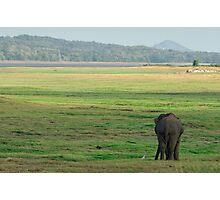 Wild Asia Photographic Print