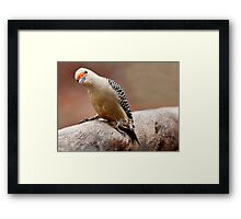 Curious or Drunk???? Framed Print