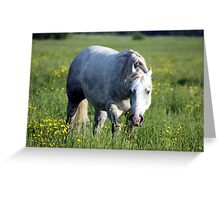White Horse in Pasture Greeting Card