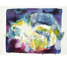 CATS PLAYING Photographic Print