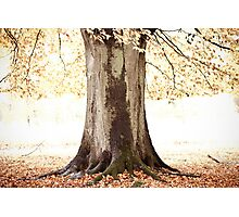 The Tree of Light Photographic Print