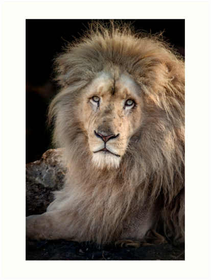 King Of The Jungle by Patricia Jacobs CPAGB LRPS BPE3