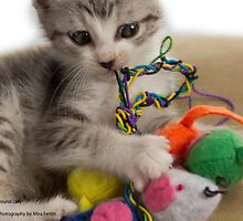Rescue kitten - Pound cats by Mira Fertin