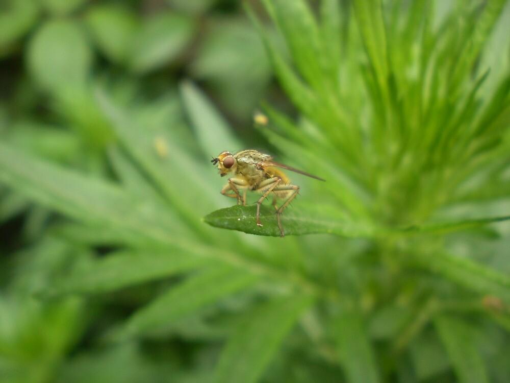 Bug On A Leaf One by Drewlar