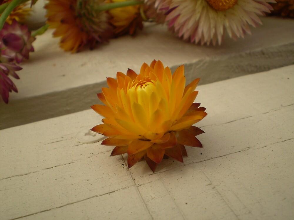 The holy flower by Drewlar