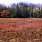 Yosemite Meadow by Nina Hofstadler