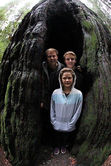 Redwood Cave by Nina Hofstadler