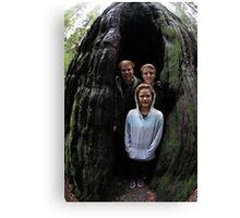 Redwood Cave Canvas Print