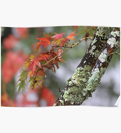 Napa Tree Poster