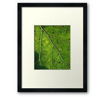 Green Growth Framed Print