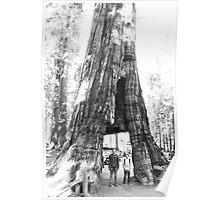 Walkthrough Redwood Poster