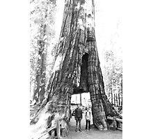 Walkthrough Redwood Photographic Print
