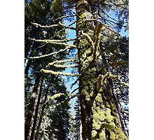 Mossy Tree 2 Photographic Print