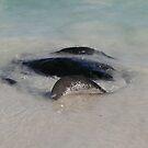 Ripplesurfer: Hamelin Bay, Western Australia by linfranca