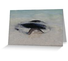 Ripplesurfer: Hamelin Bay, Western Australia Greeting Card