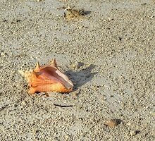 Conch on wet sand at Fox Hill Creek in Nassau, The Bahamas by Jeremy Lavender Photography