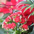 Christmas Flowers by Rumyana Whitcher