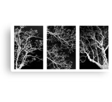 Tree Triptych Canvas Print