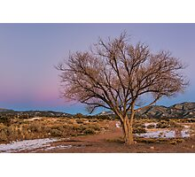 Contemplation Tree Photographic Print