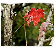 The Leaf is Red Poster