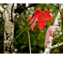 The Leaf is Red Photographic Print