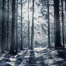 """Winter solstice"" by JanneO"